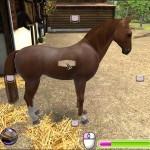 Лошадь-моей-мечты-3