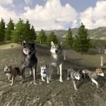 WolfQuest-1